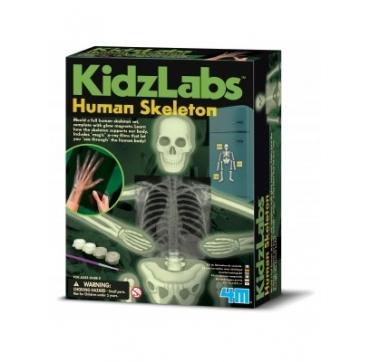 4M selvlysende skelet